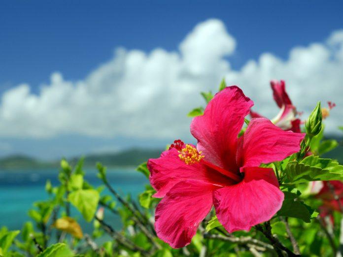 Botanical Gardens on Oahu